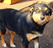 Молодая стерилизованная собачка